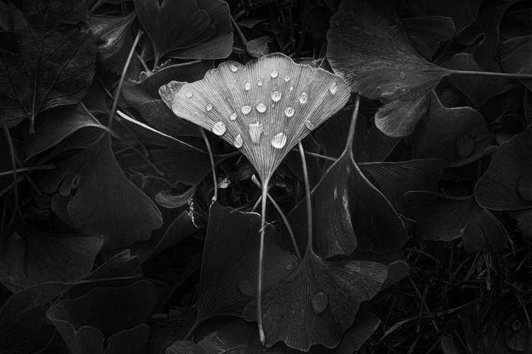 bitter, dry leaf squash, blown  - scottnorrisphotography | ello