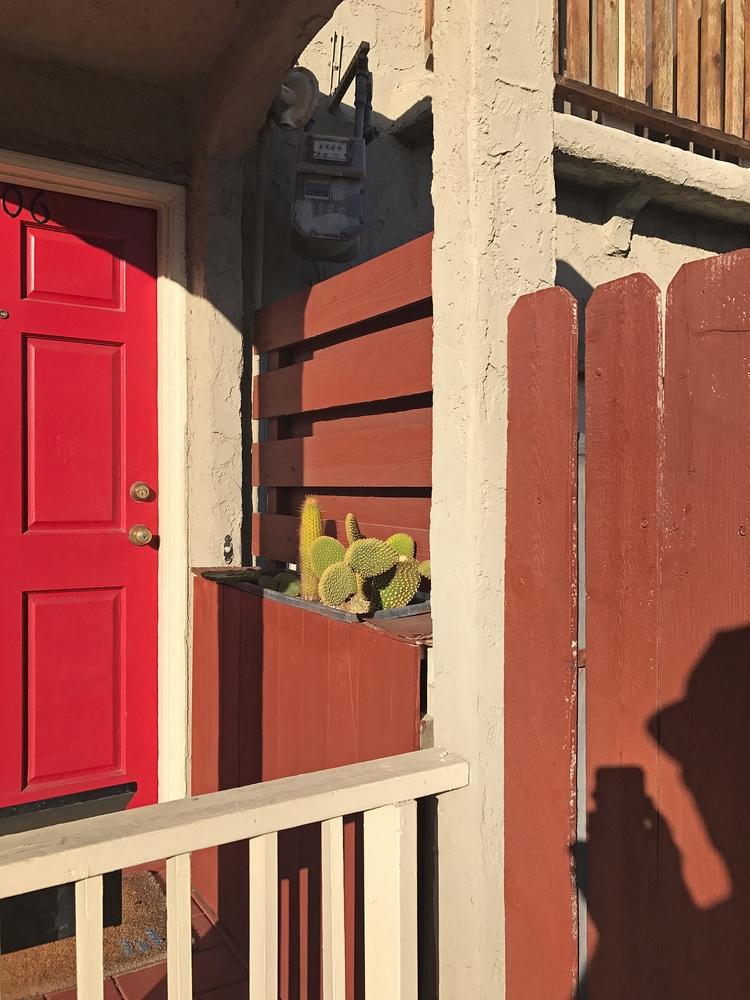 Projection, Cacti, Red Door, Si - odouglas | ello