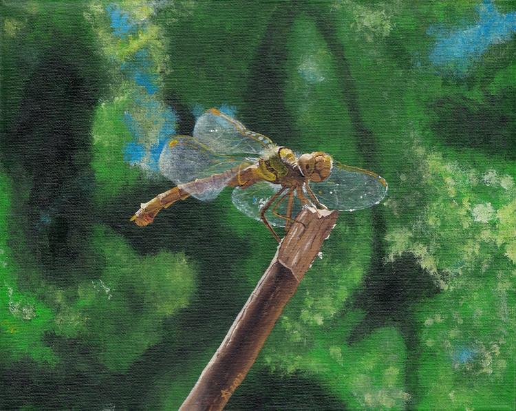 Dragonfly Aušrinė - acrylicpainting - raudona | ello