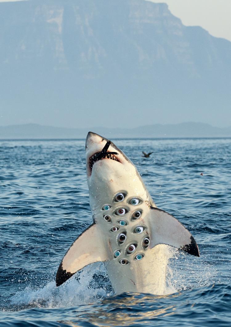 Ayahuasca Dreams - ellocollage, shark - liaveiro   ello