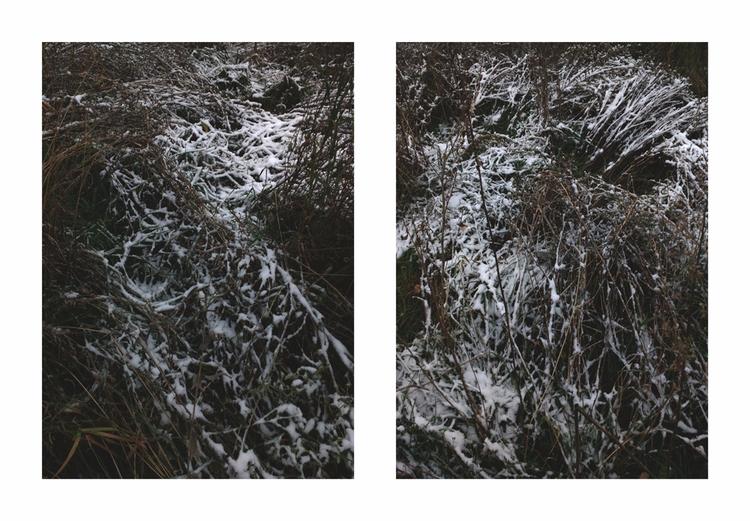 November - snow, grass, plants, botanical - andreigrigorev   ello