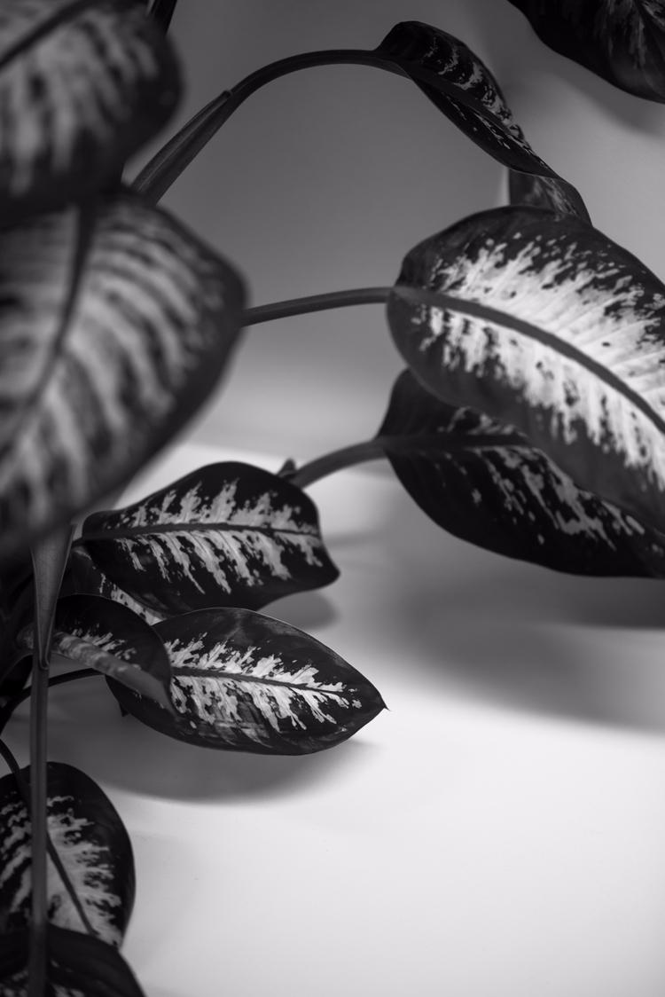 Leaves - photography, abstract, stilllife - maxwellcorreia | ello