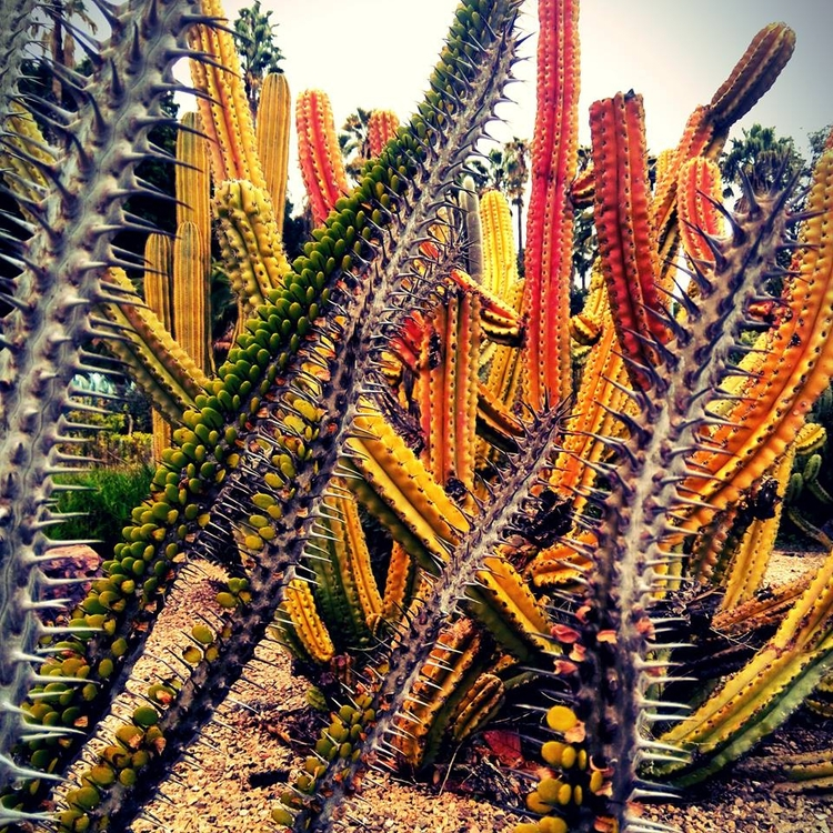 barcelona, winter, garden, cactus - this_game_has_no_name | ello