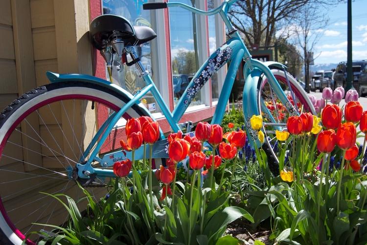 Daily Tulip – News World Saturd - robert-mcangus | ello