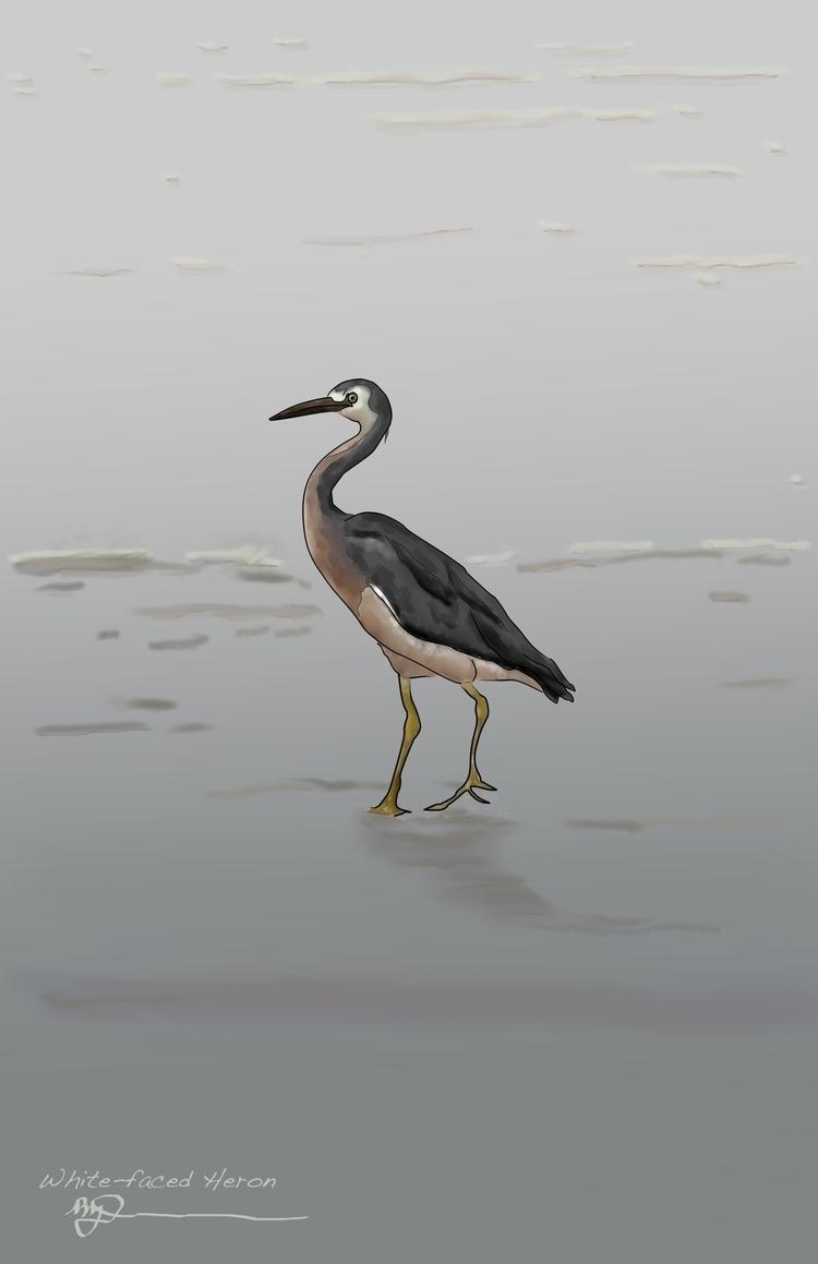 White-faced Heron - illustration - rachelj-1394 | ello