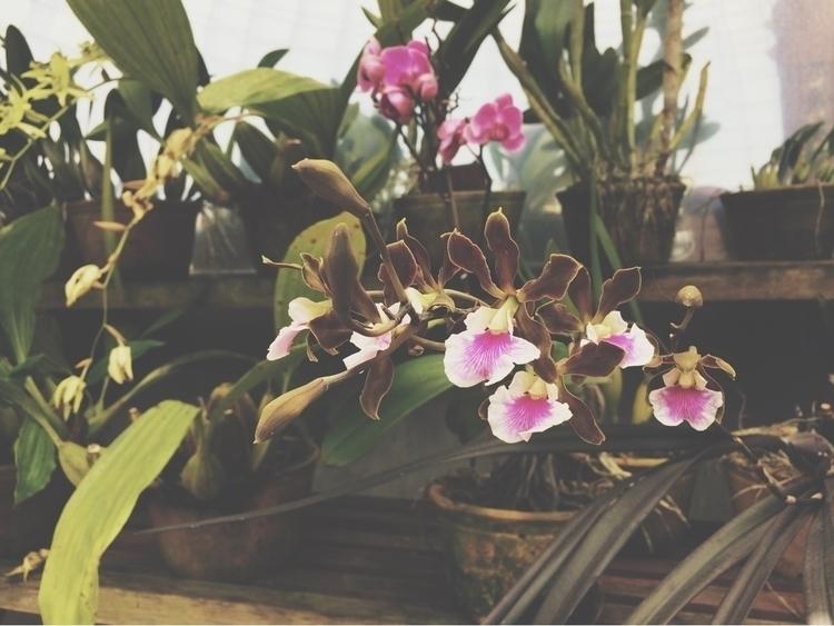 flowers, sãopaulo - cheiladbarros | ello
