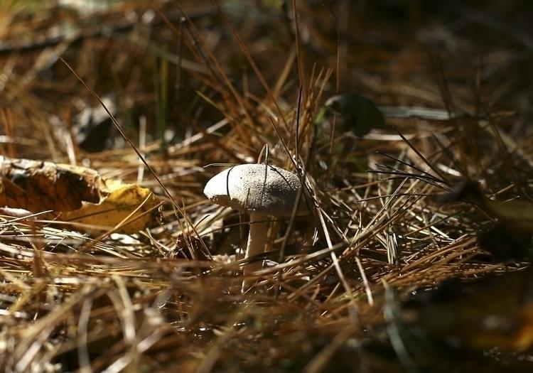 Mushroom. Carroll County, MD. O - vujadav17 | ello