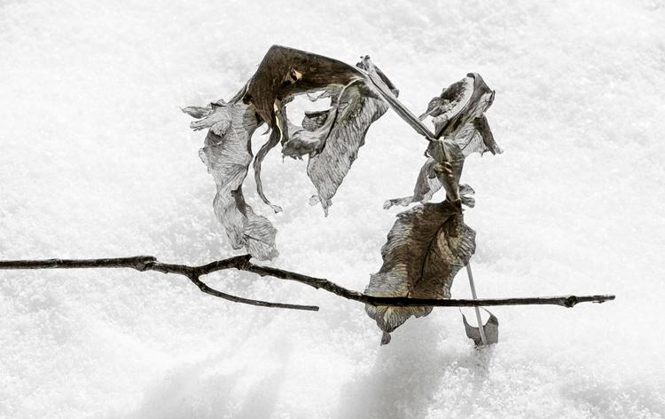 dragons, fighting snow  - monochrome - docdenny | ello