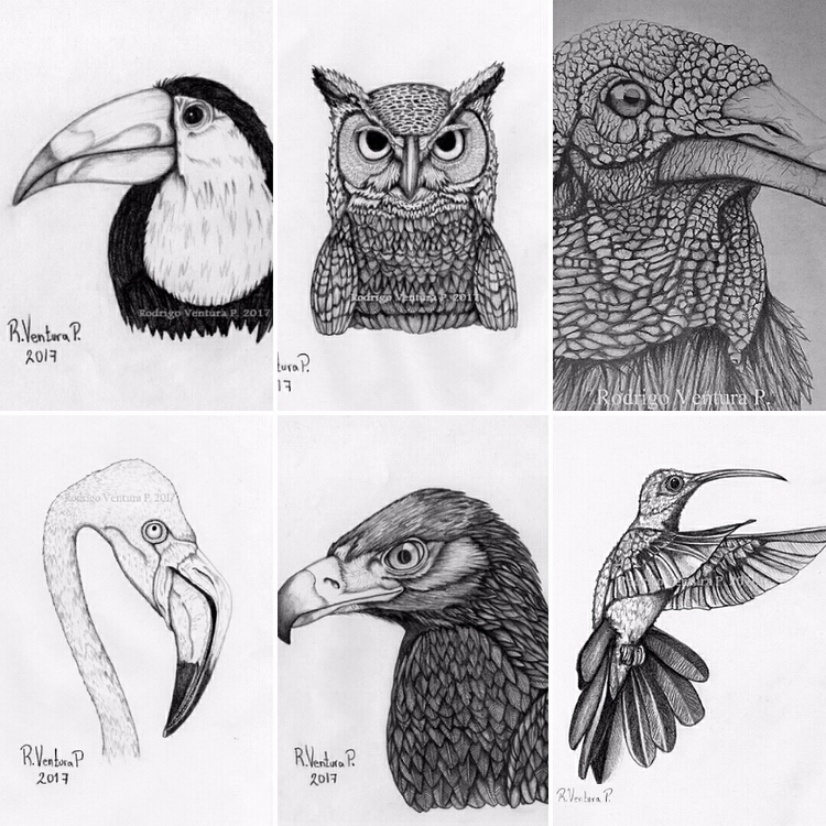 Owl, Vulture, Flamingo, Eagle - arodrigovp | ello