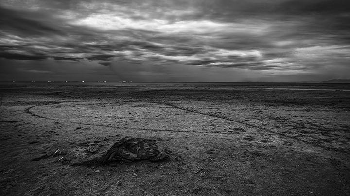 palm, Bombay Beach, California - frankfosterphotography   ello
