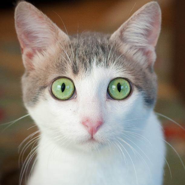 COMMENT SHARE Meet: Jeremy Fish - snapcats | ello