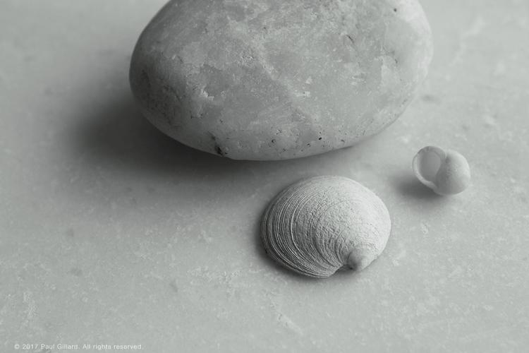 Title: Sound sea - 004 - shells - paulgillard | ello