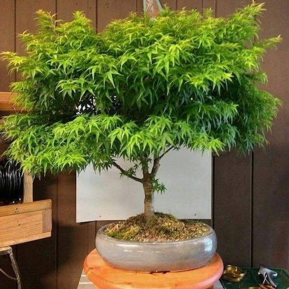 Weed bonsai - cannabis, weedstagram - lolosbri | ello