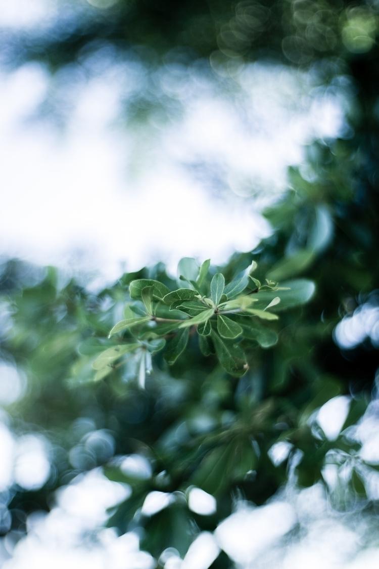 wanna light - photography, nature - myinfjvibes | ello