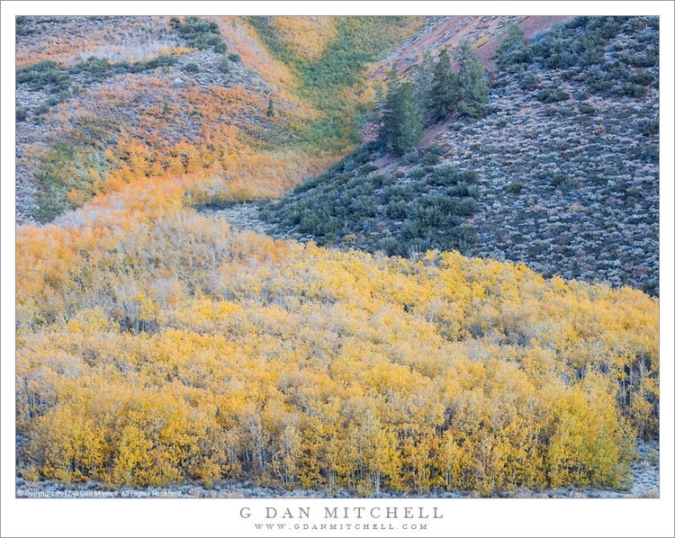 Photograph day: River Aspens. S - gdanmitchell | ello