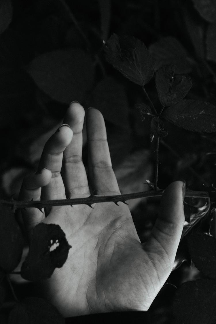 thorns, 25.11.17 - nature, photography - brecht_vanhoutte   ello
