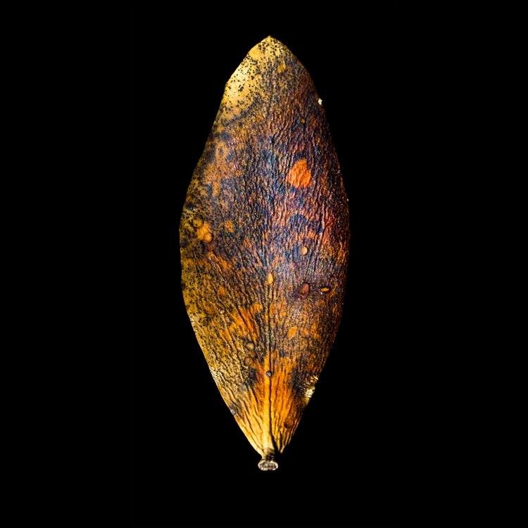 leaf 205 series leafscapes jojo - craigcloutier | ello