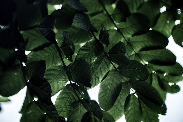 Sky Full Leaves - photography, nature - myinfjvibes | ello