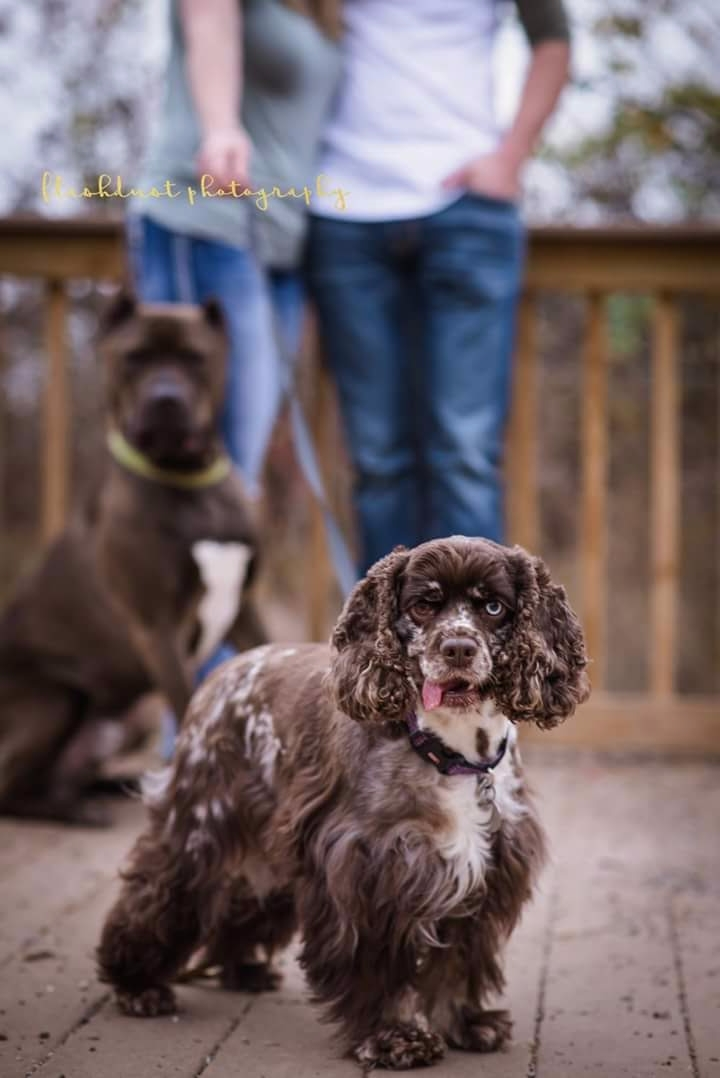 dogs, dogphotos, joplinphotographer - flashdustphoto | ello