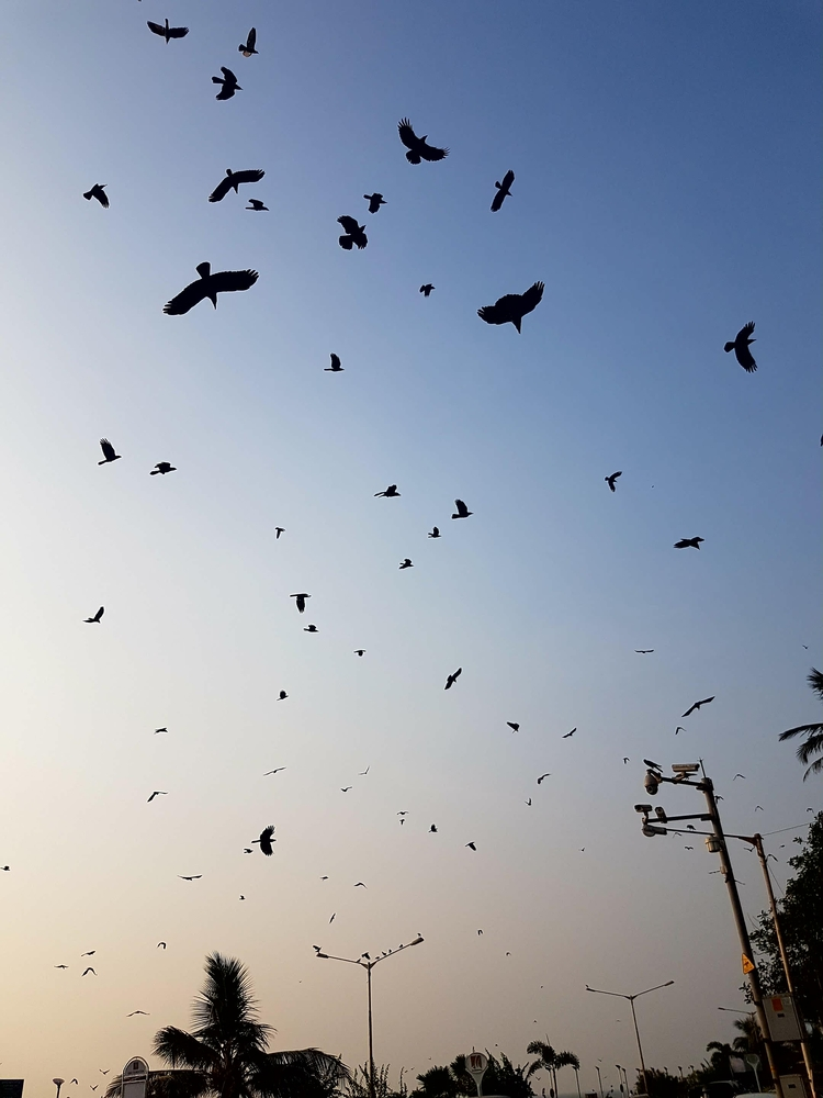 Birds - umez | ello