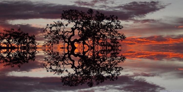 Quercus reflections Concertina  - davemrus | ello