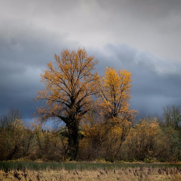 Fall color winter sky - photography - toddhphoto | ello
