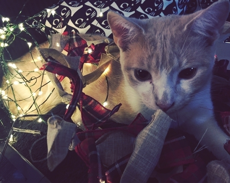 Christmas kitty - catsofello, christmas - vmaxx13 | ello