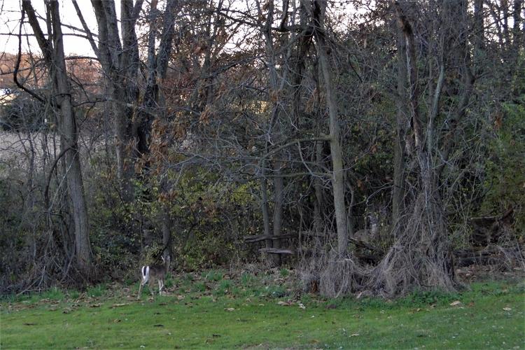 deer. 112917 - jymmm3 | ello