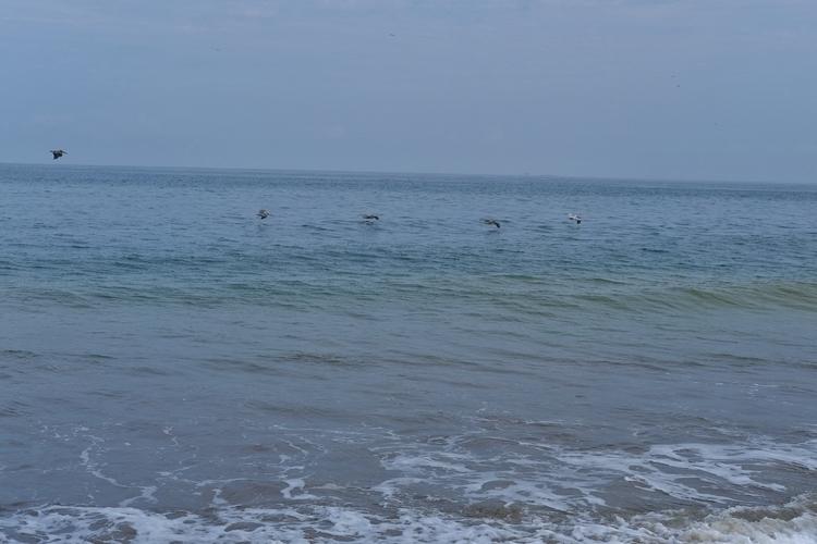 Pelikane im Flug - weltfarben | ello