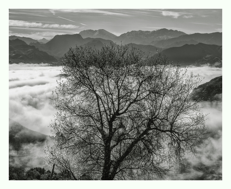 Tree clouds - guillermoalvarez | ello