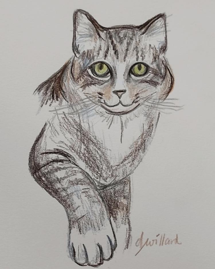 catdrawing, pencildrawing, illustration - deborahwillard | ello