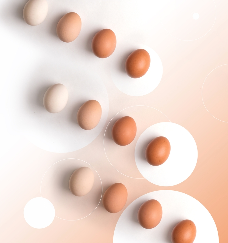 shades - egg, food, art, foodart - ynart | ello