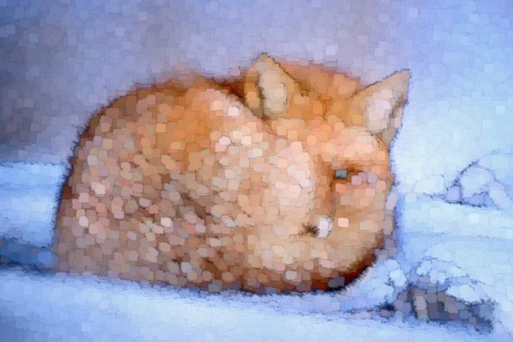 fox - nature, animals, winter, digitalart - jazer | ello
