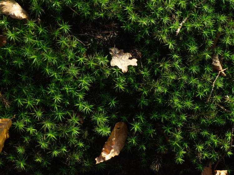 Natural   beings, commons habit - paulzoller   ello