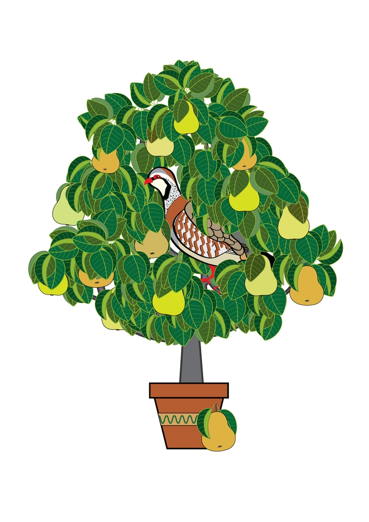 "Partridge Pear Tree"". Christmas - rachelj-1394 