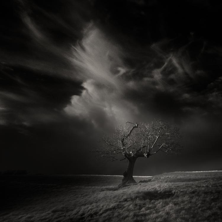 onetwotree XXVII - infrared, wales - andyleeuk | ello