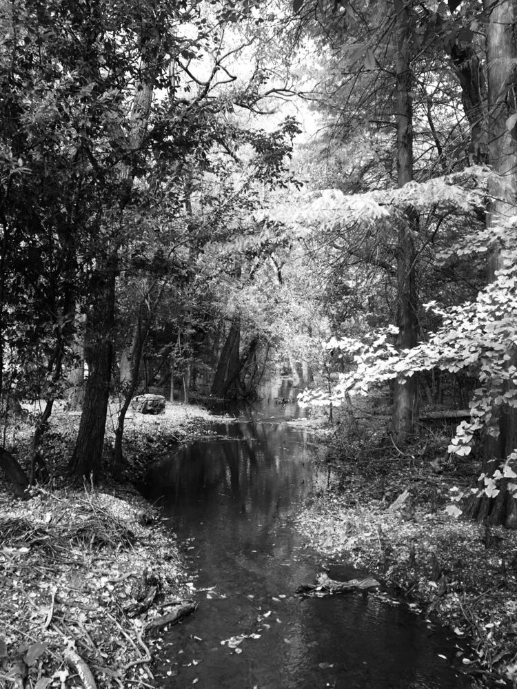 Forest - txguy1971 | ello