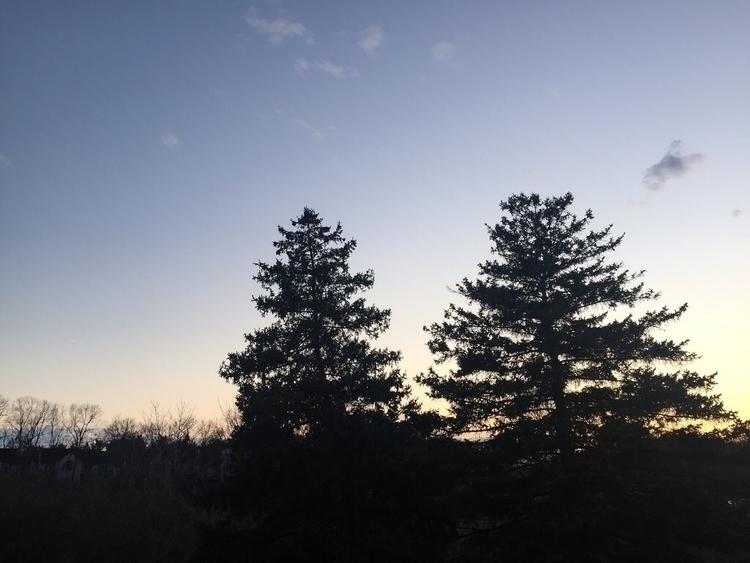 silhouette trees walk - coolphotochic182 | ello