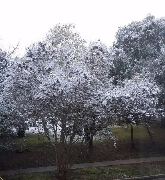 Snow Houston... happen?! snowed - rumblepress   ello