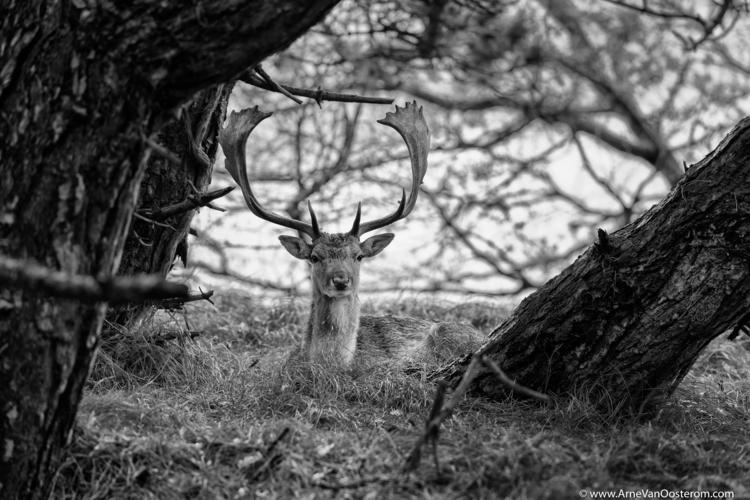 project Dunes - blackandwhitephotography - arnevanoosterom | ello