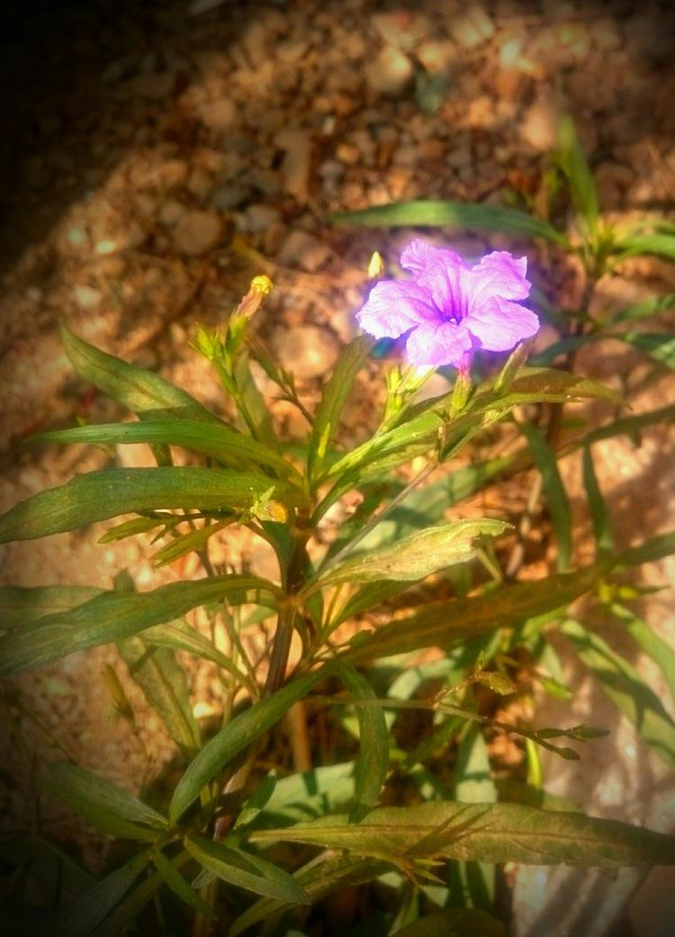 FLOWER - INDIA - atulbw | ello