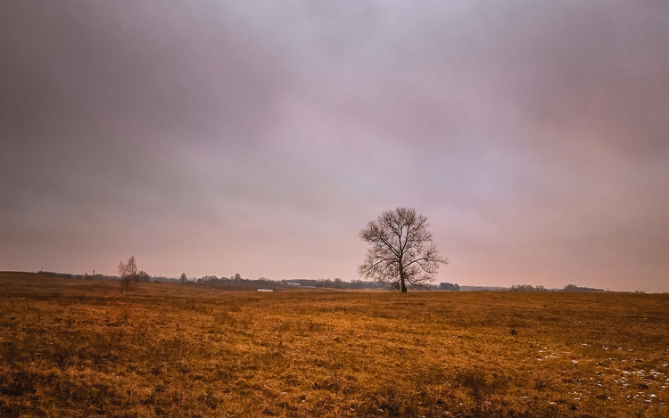 field, horizon, nature, lithuania - beheroght | ello