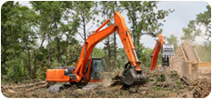 Tree Removal TREE REMOVAL SPECI - nswtreemanagement | ello
