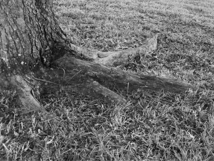 Zen Backyard Tree Evening Apps - mikefl99 | ello