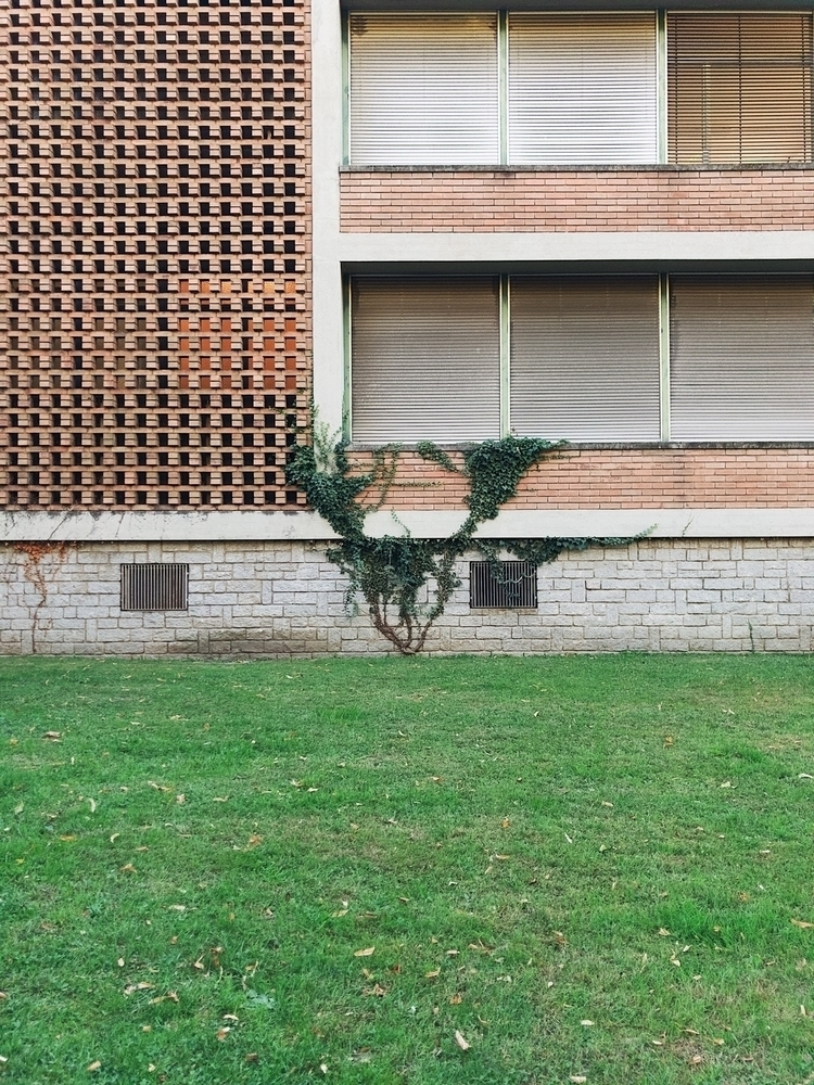 Life win - life, plant, green, wall - neimmo | ello