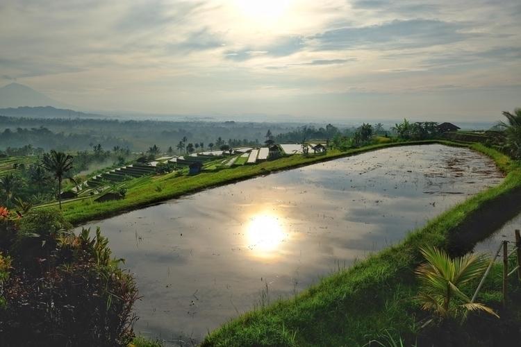 Reisfelder von Jatiluwih, Bali - weltfarben | ello