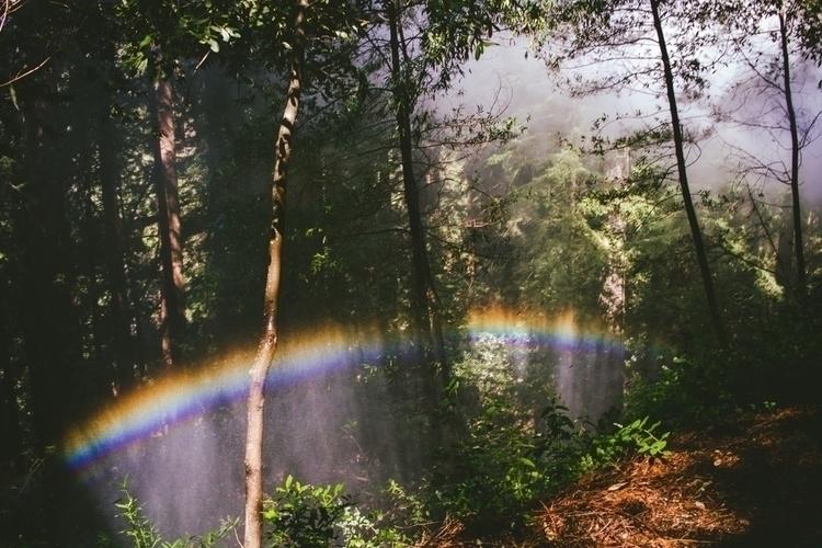 Rainbow woods. Felton, CA. Apri - leilanigomez | ello