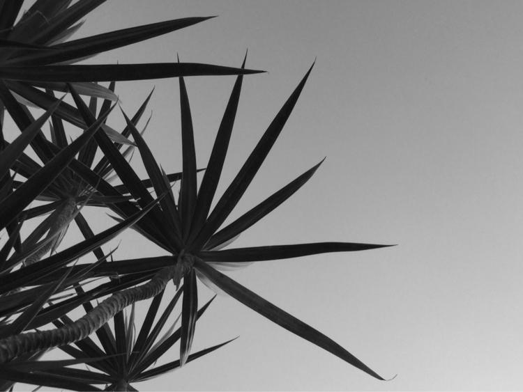 Palm Tree Clear Evening Sky App - mikefl99 | ello