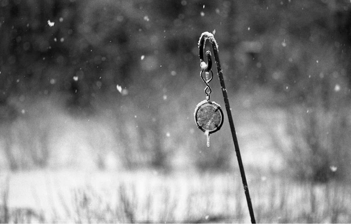 snowed - theAnalogueResistance, 35mm - flaneurity | ello