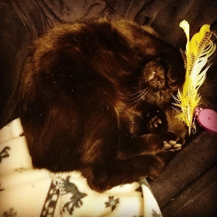 cats sleep weird - adragonssister | ello
